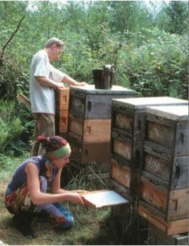 Ohne Bienenkontakt ist die Varroadiagnose ganz einfach.
