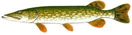 pêcheur de brochet en rivière