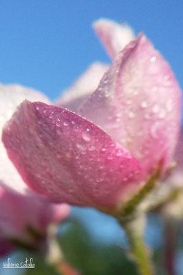Consultation Fleurs de Bach Occitanie Saint Gaudens Bien être apaisement stress flacon d'équilibrage émotionnel