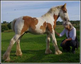 Soins animaux et communication animale à Agen et Bon-Encontre (47- Lot et Garonne)