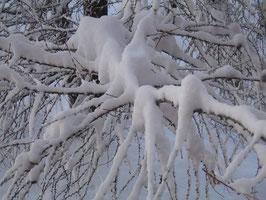 Tausendfüssler in der Winterstarre