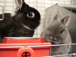 ネザー:ブリジットちゃん(左)&ボルト君(右)