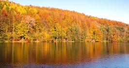 Wald mit herbstlicher Verfärbung