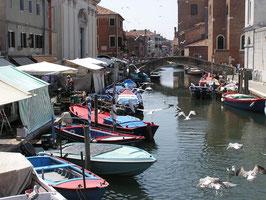 Chioggia, auch Klein-Venedig