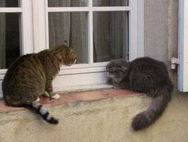場所の取り合いで喧嘩中。