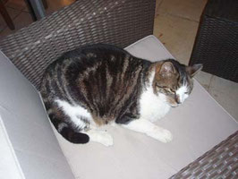 宿の猫は超おデブな巨大猫でした。