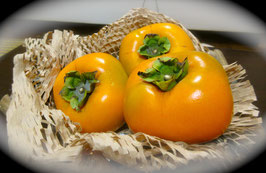収穫したての刀根(とね)柿です。It's Japanese persimmon.