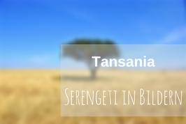 Bilder Serengeti Tansania