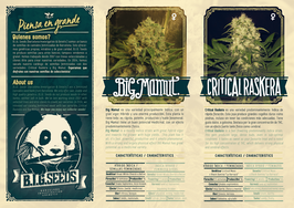 catalogo semillas marihuana BIG Seeds 2015
