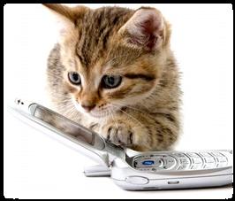 ecole du chat neuvecelle pension reservations