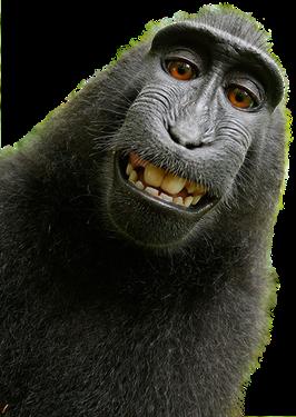 Ein grinsender schwarzer Affe als Sinnbild unseres Angebots der Parodontitisbehandlung in der Gemeinschaftspraxis Maiwald Staudenmayer in Ludwigsburg