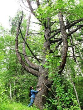 Дерево Духа местности