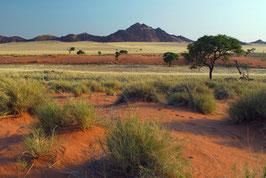 Die südliche Namib