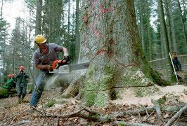 Auch die Forstwirtschaft zählt laut Einschätzung der Banque Pictet zu einem Megatrend.