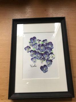 Zelf een schilderij achter glas maken met verse viooltjes