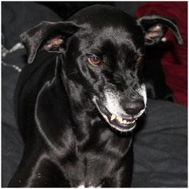 Ganzheitliche Hundeverhaltensberatung und -training