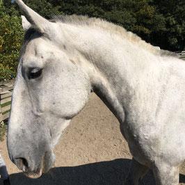 NR Coaching Pferd als Spiegel