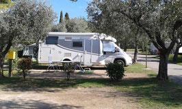Wohnmobil unter Olivenbäumen.