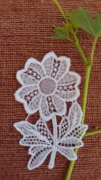 Blume,   Art.  6104