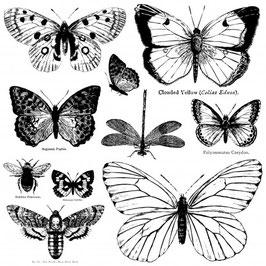 Stempelset  Butterflies