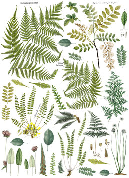 FROND BOTANICAL - IRON ORCHID DESIGNS TRANSFER