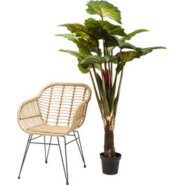 Deko Pflanze Regenwald