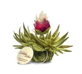 ErblühTeelini - Pfirsich