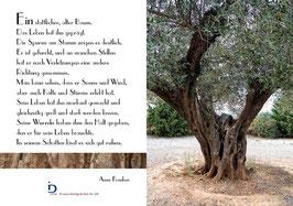 Pfarrkarte - Der Olivenbaum