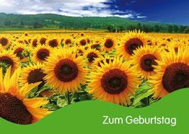 Pfarrkarte - Zum Geburtstag - Sonnenblumenfeld