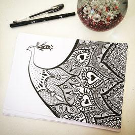 Ilustração Pavão