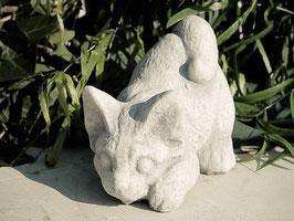 Katze- Art. 353