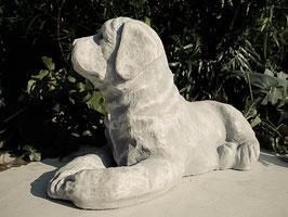 Labrador - Art. 710