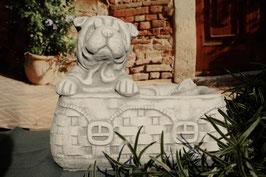 Bulldogge in Tasche - Art. 705
