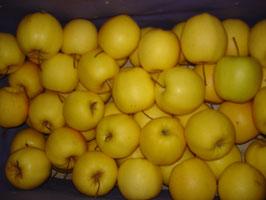 Äpfel - Golden Delicious