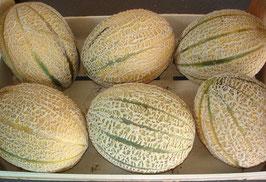 Melonen - Zuckermelonen