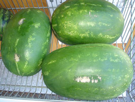 Wassermelone  - Angurie