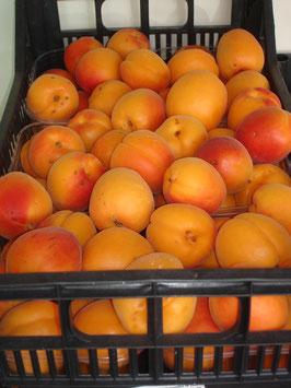 Marillen - Aprikosen