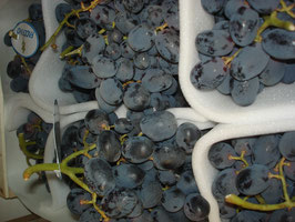 Trauben, blaue Weintrauben