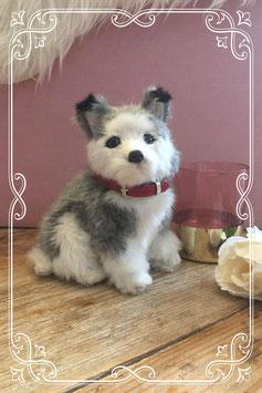 Lief klein husky hondje