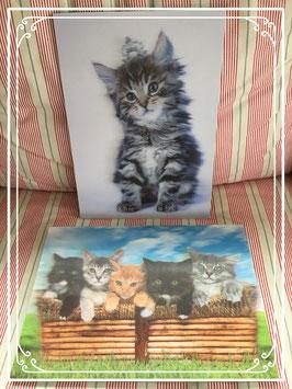 Set 3D schilderijen van kittens