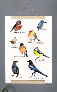 "Kunstdruck ""Vogelarten"" Aquarell"