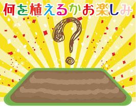 【送料無料】何を植えるかお楽しみ!畑向けおまかせセット(最低でも9本入)