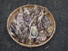 生食用からつんカキ【養殖】(からつんカキグループ)