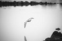Atterrissage d'Aigrette blanche /6283