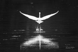 Départ d'Aigrette blanche /6280