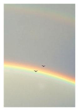 Gänse im Regenbogen