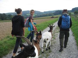 Ziegenwanderung im Wienerwald