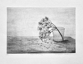 Holunderblütenzweig
