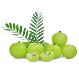 Amla Extrakt - 35% Tannine, GMP
