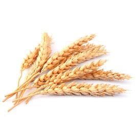 Hydrolysiertes Weizen Protein (Phytokeratin)